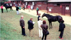 Management of Racing & Breeding Stock