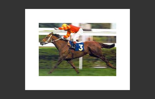 Top Class Horse Bumper Star