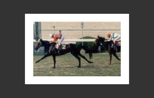 PersianBoy Gr.1 winner in Japan